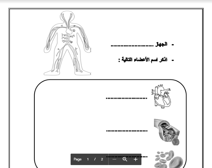 ورقة عمل علوم الصف الرابع الجهاز الدوري والعصبي الفصل الثاني