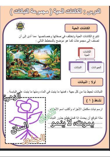 حل درس مجموعة النباتات علوم المنهج المساند للصف الرابع الفصل الثاني إعداد أ. فجر السعيدي